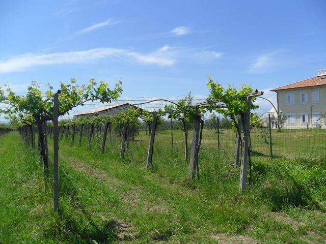 Building land for sale in Torino_Di_Sangro, Chieti Province